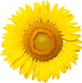 img-sunflower